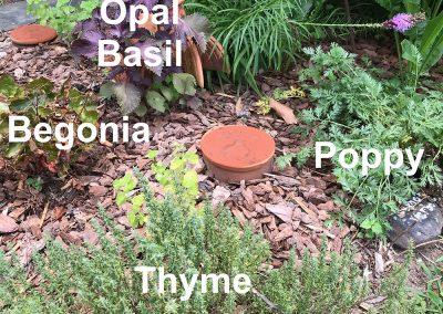 Herbs, flowers and volunteer trees!